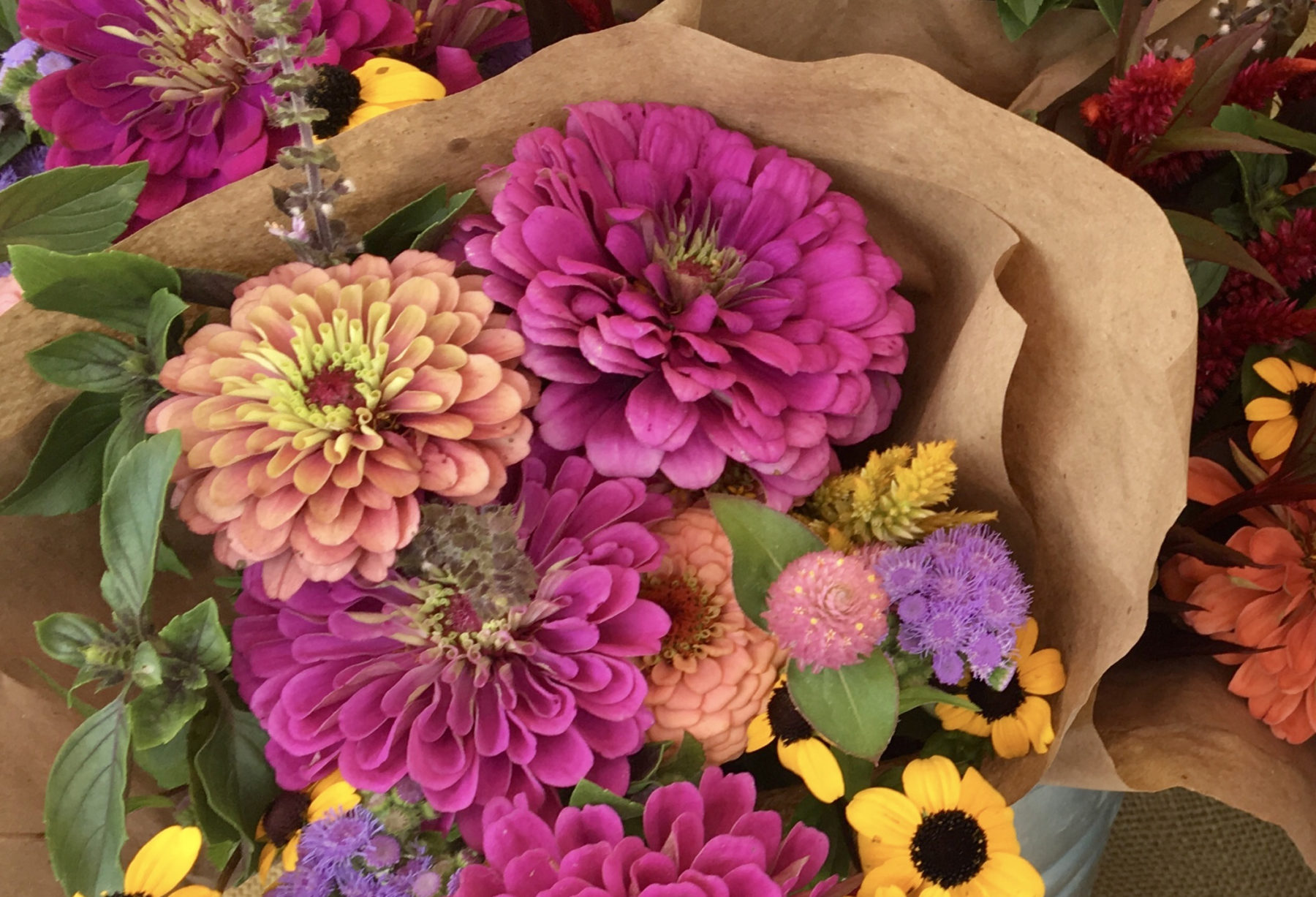 Color Fields Farm Flowers
